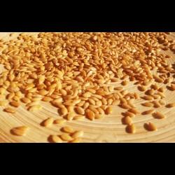 Semente de Linhaça Dourada Nativa Ecologica 300g